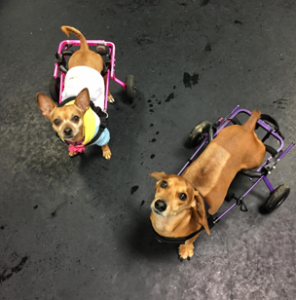 Rehabilitation & Conditioning Rooms | Canine New England and The
